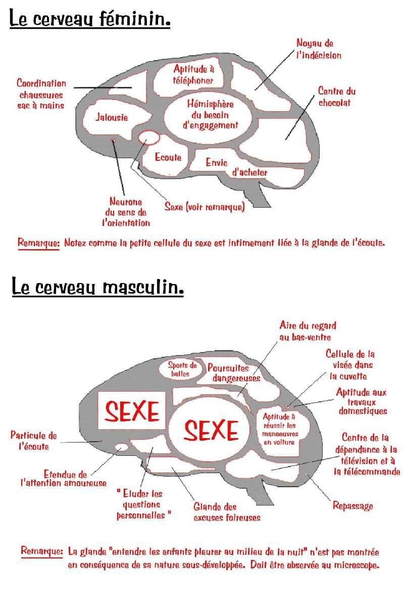 cerveauhf.jpg