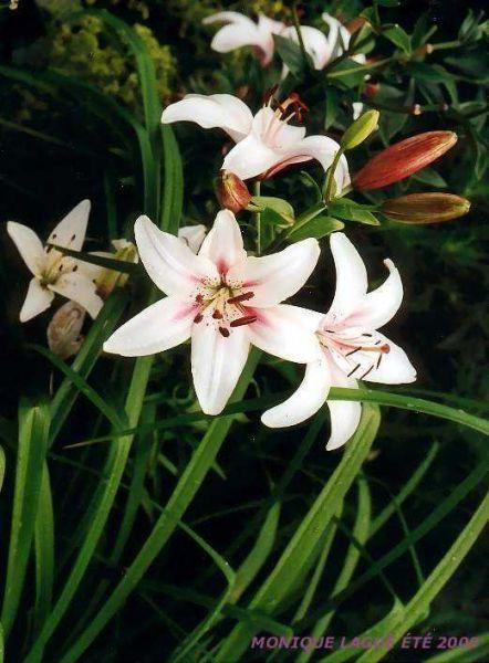 fleursblanches20039web.jpg